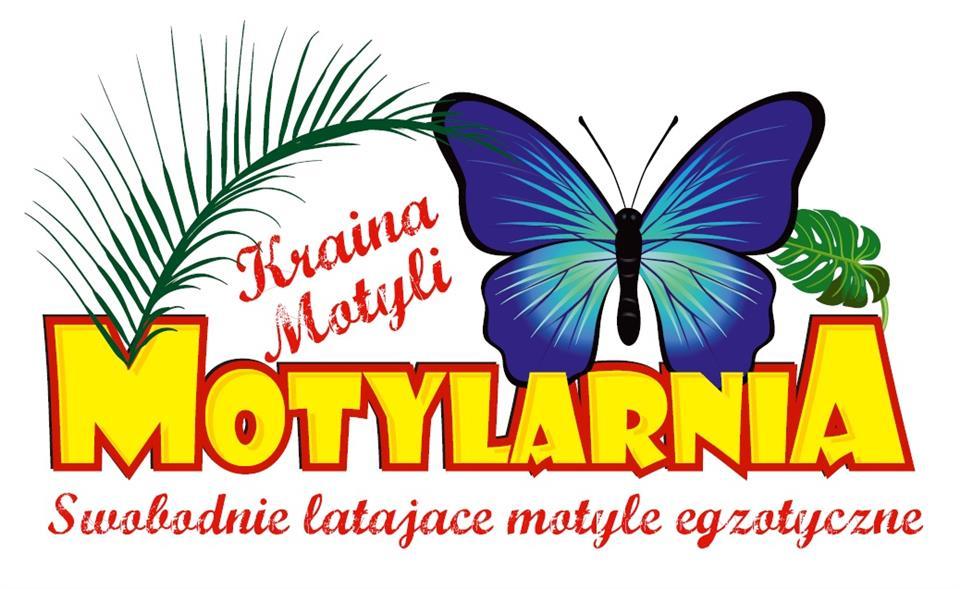 logo motylarnia